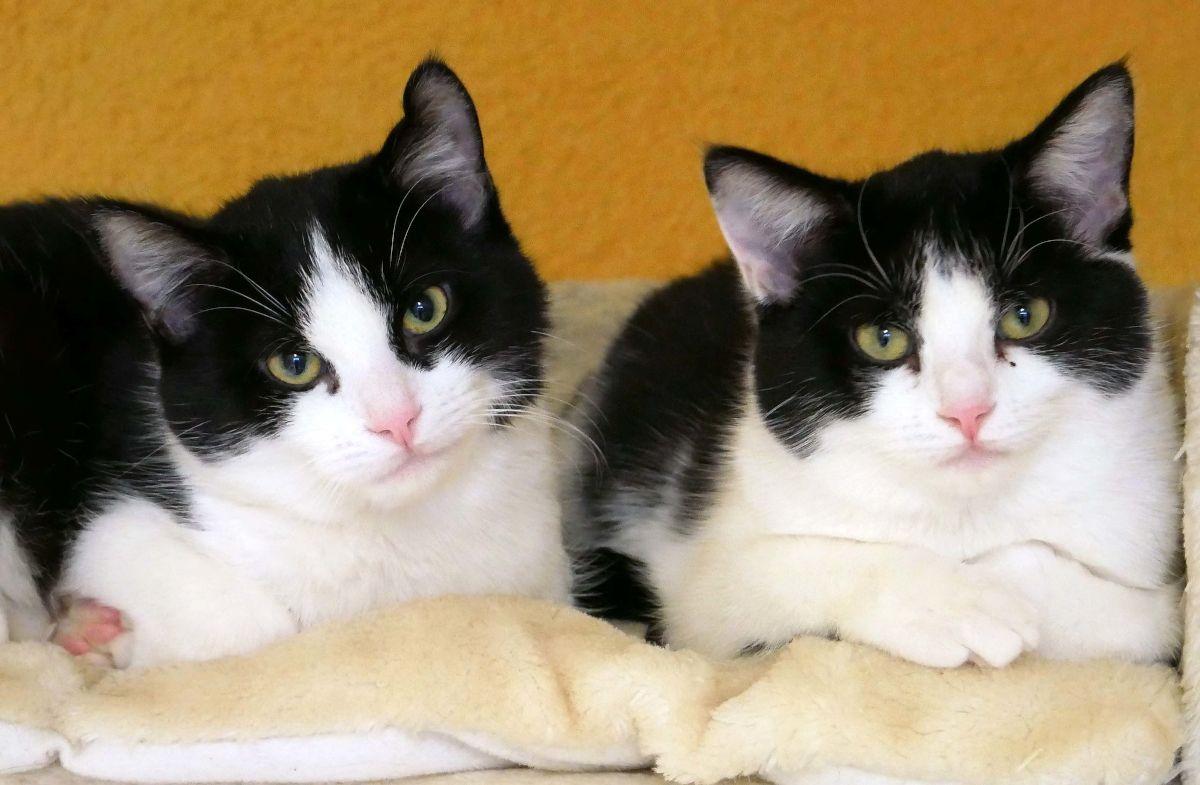 Emmy und Sina