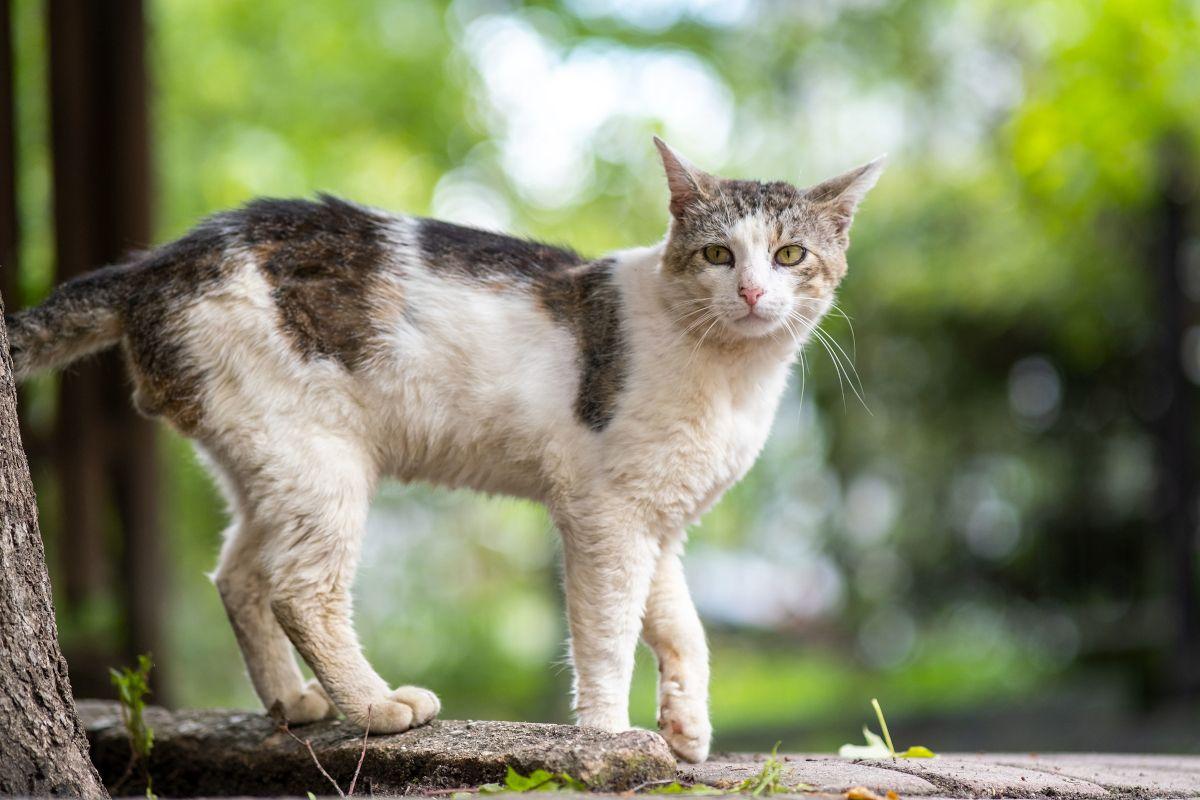 Was tun, wenn plötzliche eine streunende Katze auftaucht?