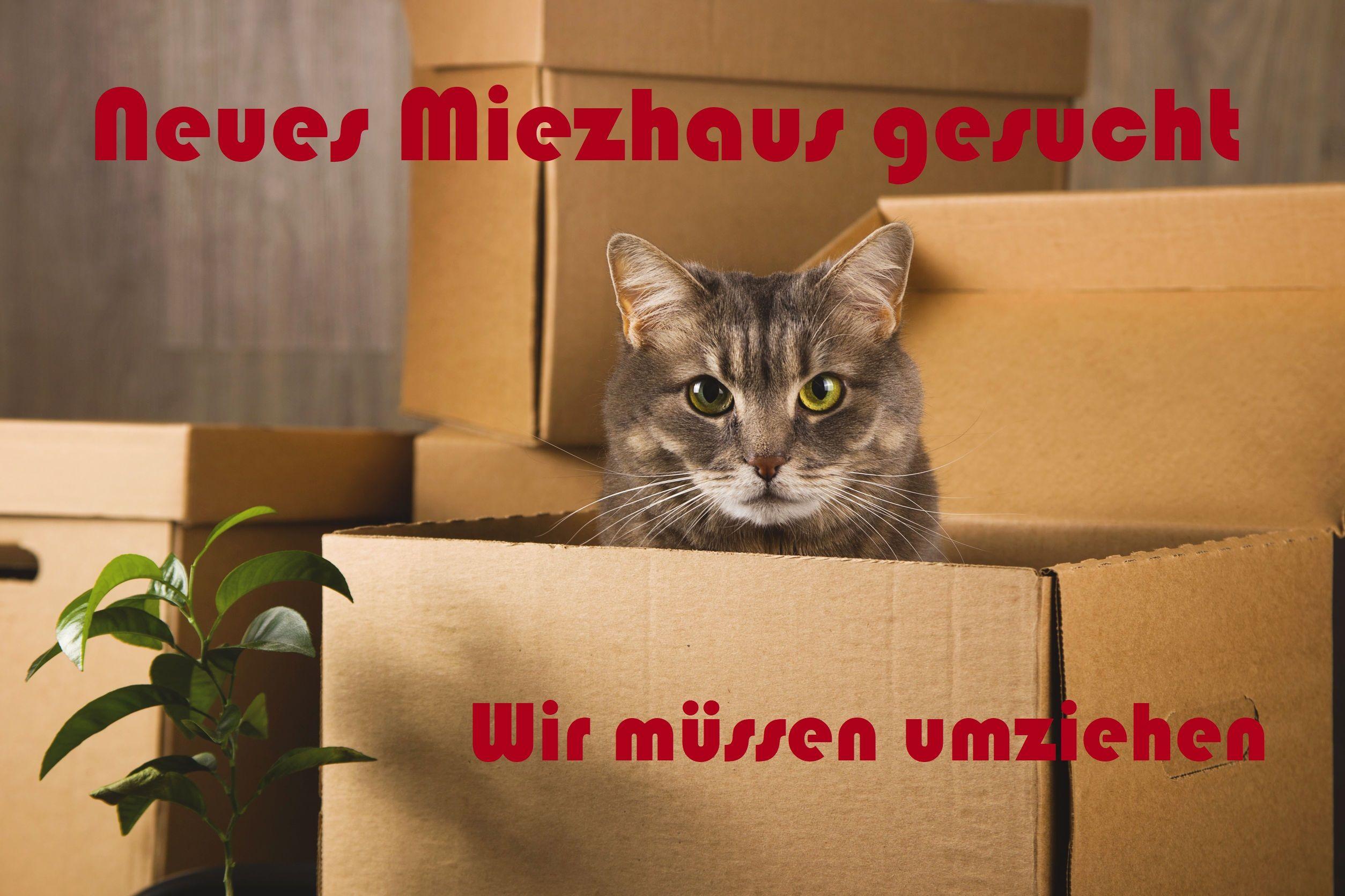 Die Katzenhilfe Neuwied muss umziehen.