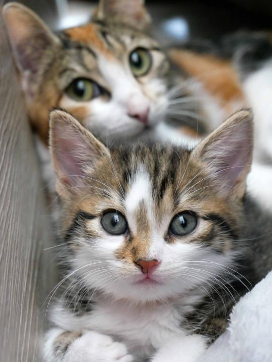 Katzenkind mit Mama
