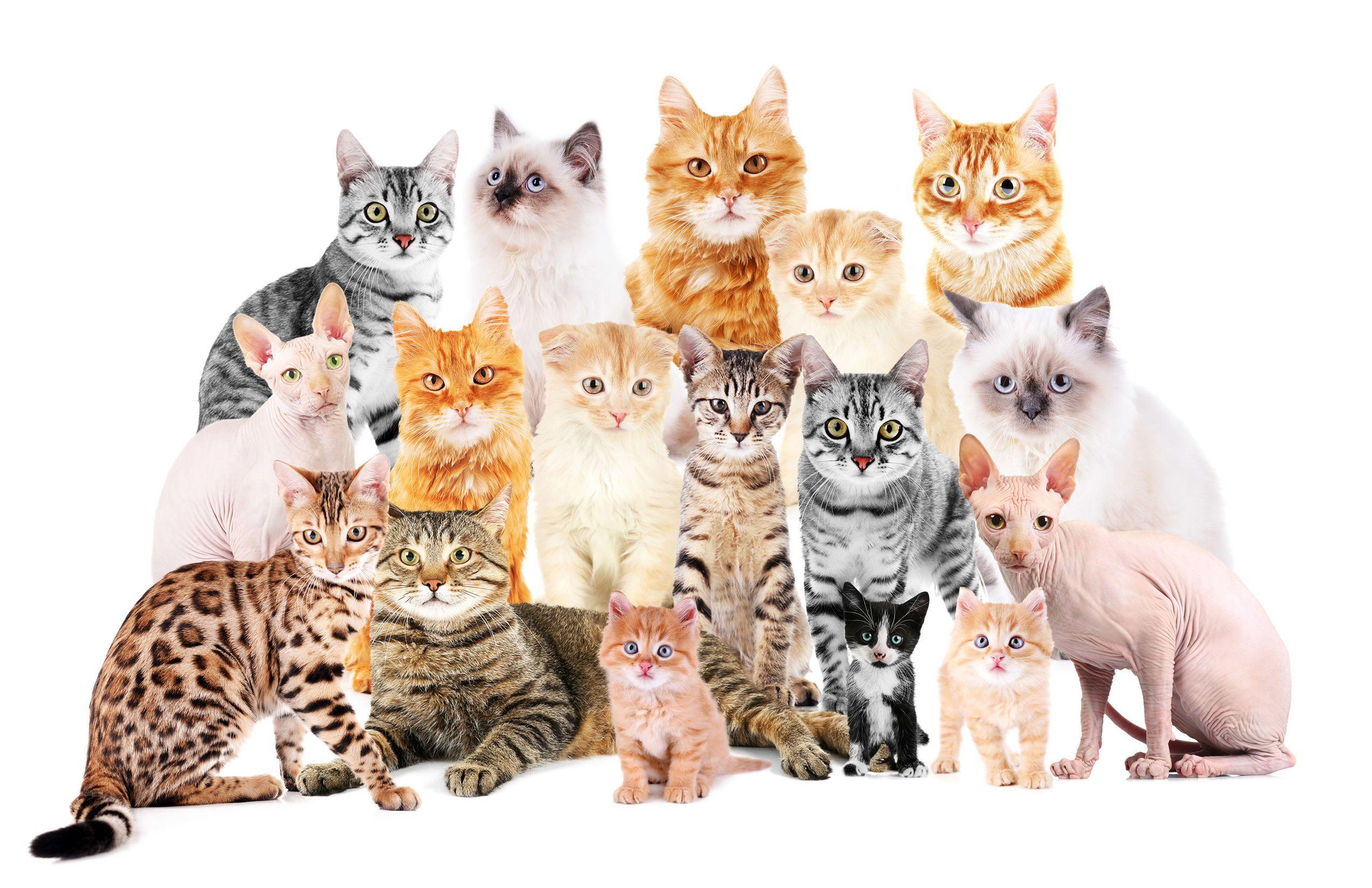 Katzen(hilfe)versammlung