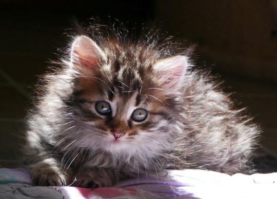 Der 8. August ist der Internationale Tag der Katze