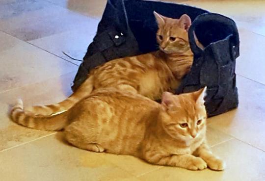 Carlo und Charly