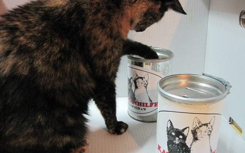 Katzen finden unsere Geldsammeldosen gut - Sie bestimmt auch