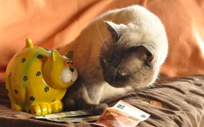 Jeder Euro zählt - Unterstützen Sie uns durch Ihre Spende!