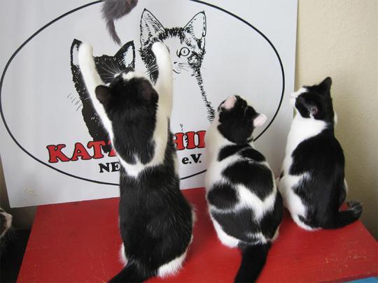 Katzenhilfe Neuwied e.V.