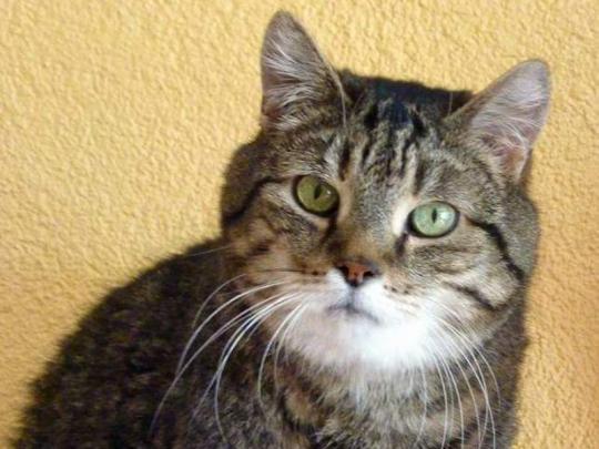 Eine unserer Patenkatzen - Max