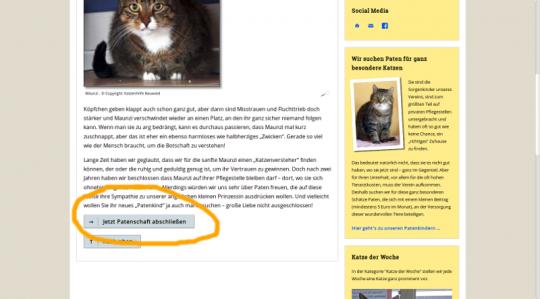 Eine Katzen-Patenschaft ganz einfach online abschließen
