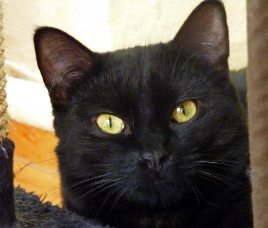 Black Cat-Bande