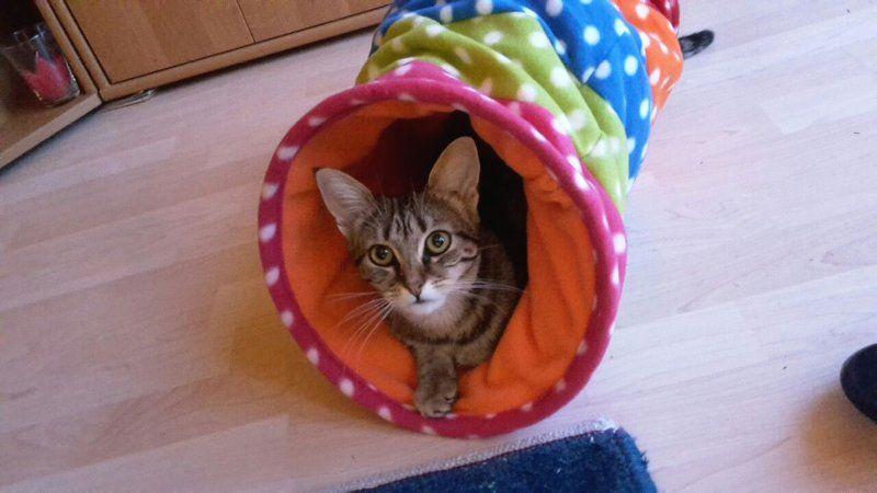 Mausi und das gesamte Team der Katzenhilfe Neuwied bedanken sich für eure Spenden!
