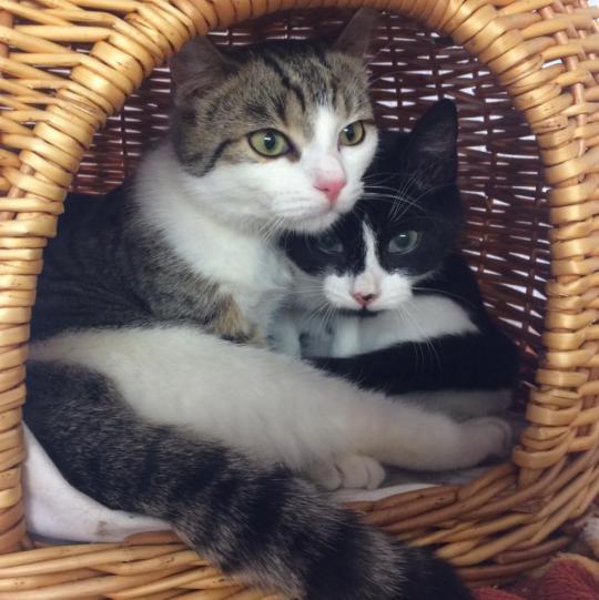 Frederick und Peppels