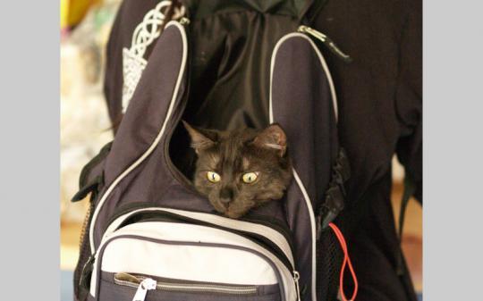 Eine Katze zieht ein: Witzig, aber bitte nicht so - sondern in einer sicheren Katzentransportbox!