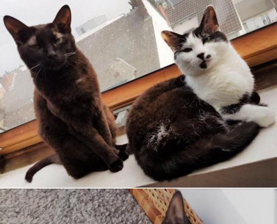 Shiva und Cleo