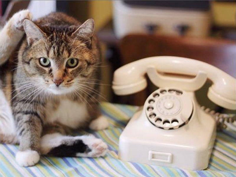 Katze und Telefon