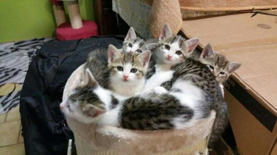 5 kleine Fellnasen