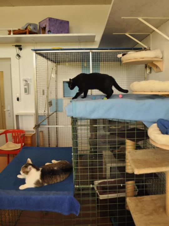 Die scheuen verstecken sich, die mutigeren Katzen spielen ...