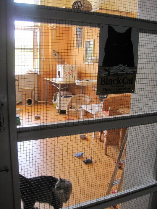 Raum Black Cat von außen gesehen ...