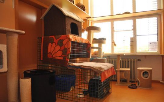 Gitterkäfige für neu angekommene Katzen
