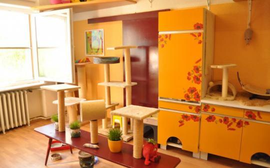 Die Küchenschränke sind ein tolles Versteck und Rückzugsmöglichkeit zugleich