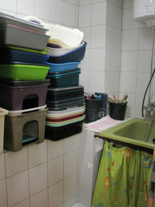 Jede Menge Katzentoiletten, die jeden Tag sauber gemacht werden müssen.