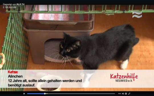 Screenshot des Beitrags von RLP.TV über die Katzenhilfe Neuwied