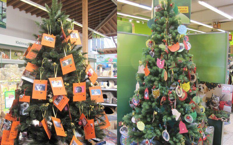 Weihnachtsbaum-Aktion bei Dehner und Fressnapf